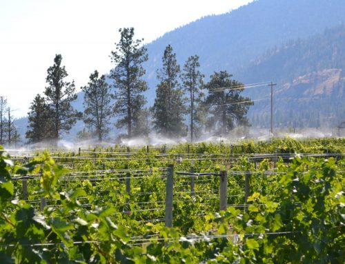 Sound Technology Reaches New Pitch For BC Pests